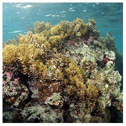 http://coralmates.criobe.pf/wp-content/uploads/2020/02/coralbommy_Squares-250x250.jpg