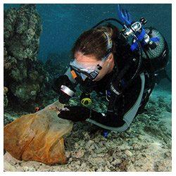 https://coralmates.criobe.pf/wp-content/uploads/2020/02/Hendrikje_Squares-250x250.jpg