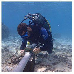 https://coralmates.criobe.pf/wp-content/uploads/2020/08/July_2_Coralmates_Squares-250x250.jpg