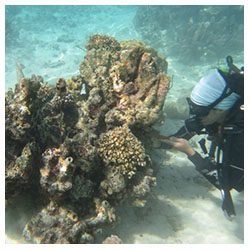 https://coralmates.criobe.pf/wp-content/uploads/2020/08/July_3_Coralmates_Squares-250x250.jpg