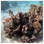 https://coralmates.criobe.pf/wp-content/uploads/2020/08/July_4_Coralmates_Squares-150x150.jpg