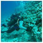 https://coralmates.criobe.pf/wp-content/uploads/2020/09/September_Photo2_Square-150x150.jpg