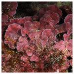 https://coralmates.criobe.pf/wp-content/uploads/2021/09/September_2021_Photo1_square-150x150.jpg