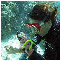 https://coralmates.criobe.pf/wp-content/uploads/2021/09/September_2021_Photo3_square-250x250.jpg